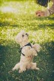 逗人喜爱的狗请求食物 免版税库存照片