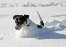 逗人喜爱的狗跳的雪 库存图片