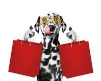 逗人喜爱的狗去购物 库存照片