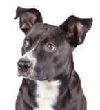 黑逗人喜爱的狗 免版税库存照片