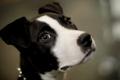 逗人喜爱的狗 免版税库存照片