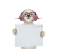 逗人喜爱的狗studend在拿着纸的学校 免版税库存图片
