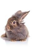 逗人喜爱的狮子头兔子兔宝宝开会的图片 库存图片