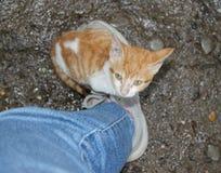 逗人喜爱的猫一点 免版税库存图片