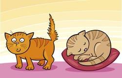 逗人喜爱的猫一点 免版税库存照片