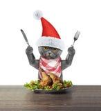 去逗人喜爱的猫吃欢乐圣诞节鸭子 免版税库存图片
