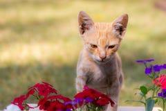 逗人喜爱的猫和花 免版税库存照片
