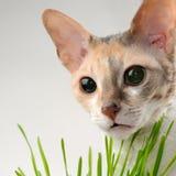逗人喜爱的猫和绿草 库存照片