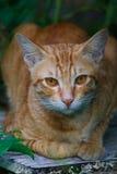 逗人喜爱的猫咪 免版税库存照片