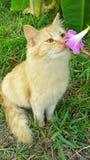 逗人喜爱的猫嗅到的花 免版税库存图片