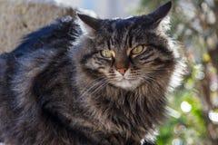 逗人喜爱的猫在列斯Baux de普罗旺斯村庄街道上发现了  图库摄影