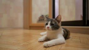 逗人喜爱的猫在地板放置在家 影视素材