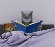 逗人喜爱的猫在床上的读一本书 免版税库存照片