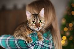 逗人喜爱的猫在所有者` s手上 库存图片