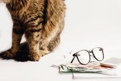 逗人喜爱的猫坐与玻璃的桌打电话和金钱,运作 库存图片