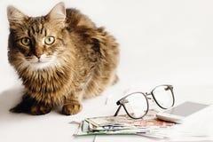 逗人喜爱的猫坐与玻璃的桌打电话和金钱,运作 免版税库存照片