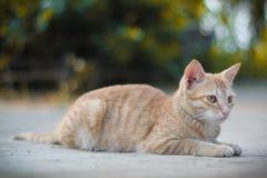 逗人喜爱的猫小猫 免版税库存照片