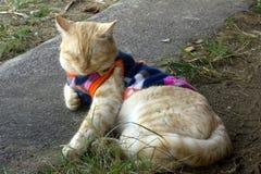 逗人喜爱的猫是毛线衣并且休息 免版税库存图片