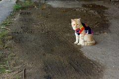 逗人喜爱的猫是毛线衣 库存图片