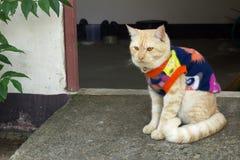 逗人喜爱的猫是毛线衣 免版税库存照片