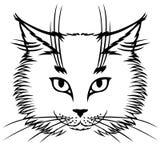逗人喜爱的猫枪口 免版税图库摄影
