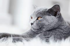 年轻逗人喜爱的猫特写镜头画象 库存图片
