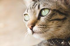 逗人喜爱的猫纵向 免版税库存照片