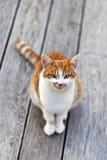 逗人喜爱的猫观察摄影师 免版税库存图片