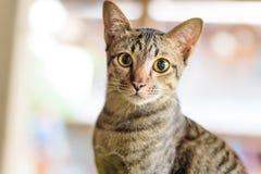 逗人喜爱的猫面孔画象  免版税库存照片