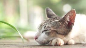 逗人喜爱的猫顶头设法在公园睡觉 股票录像