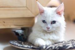 逗人喜爱的猫,美丽的猫 库存照片