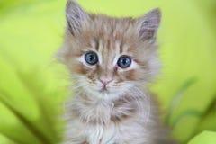 逗人喜爱的猫婴孩 免版税库存照片