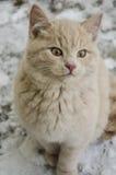 逗人喜爱的猫/小猫在雪 库存照片