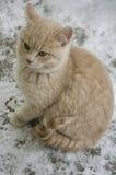 逗人喜爱的猫/小猫在雪 库存图片