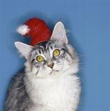 逗人喜爱的猫 图库摄影