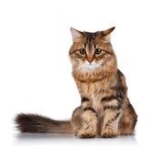 逗人喜爱的猫 库存照片