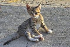 逗人喜爱的猫 库存图片