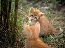 逗人喜爱的猫 免版税图库摄影