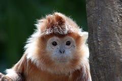 逗人喜爱的猴子纵向 免版税图库摄影