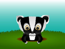 逗人喜爱的獾 库存照片