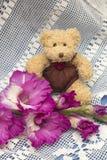逗人喜爱的玩具熊和桃红色剑兰 概念礼品查出在白色 库存图片