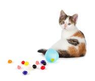逗人喜爱的白棉布小猫在溢出的软心豆粒糖旁边坐丝毫 库存照片