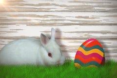 逗人喜爱的白色兔宝宝画象的综合图象  库存图片