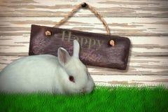 逗人喜爱的白色兔宝宝画象的综合图象  免版税库存照片