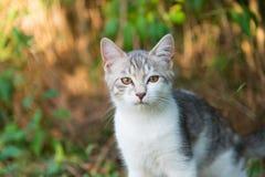 逗人喜爱的白色猫小猫在森林 免版税库存照片