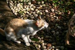 逗人喜爱的看的猫 免版税图库摄影
