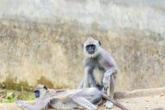 逗人喜爱的看的猴子 免版税库存图片