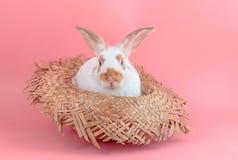 逗人喜爱的短发兔子在草帽坐桃红色backgrou 免版税库存照片