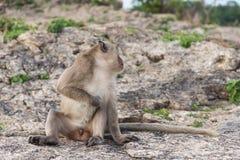 逗人喜爱的短尾猿坐绿色森林背景 免版税库存照片