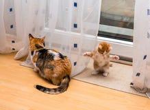 逗人喜爱的矮小的姜白的小猫在房子坐与爪子和三色猫的地板被转动  免版税库存图片